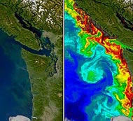 A research image of concentrations off the United States West Coast.